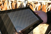 Tablet Im Stall